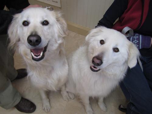Bruno & his sister