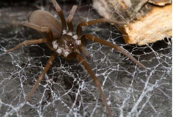 Самые ядовитые пауки в мире - ZooPicture.ru