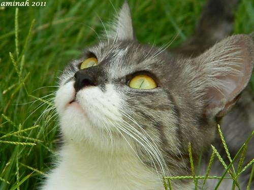 cat ^_^
