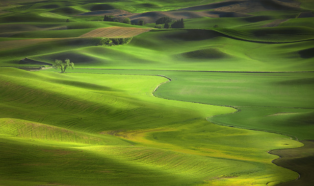 Spring greens in the Palouse