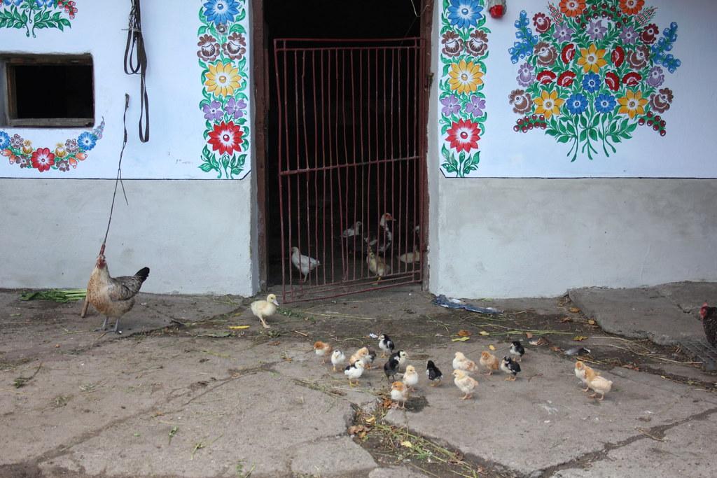 Chicken and Chicks, Zalipie, Poland