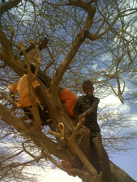 Children climbing a tree in the Dadaab refugee camp, north-east Kenya