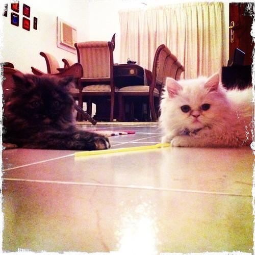 Black cat , white cat!