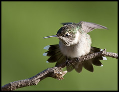 Defending the feeder