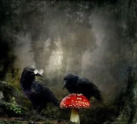 Die Mykologen - Glückspilze - Lucky Fellows - Fungi Experts
