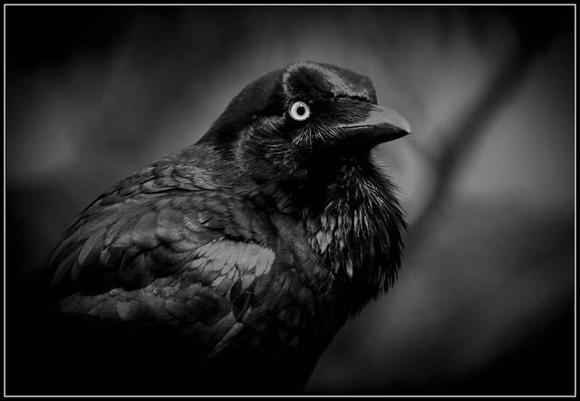 The Evil Crow