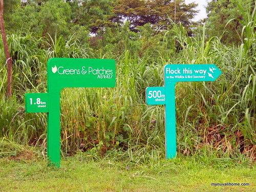 Bird and Wildlife Sanctuary, Nuvali (32)
