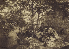 Oak Tree and Rocks, Forest of Fontainebleau, 1849-52, by Gustave Le Gray