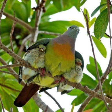 """Psalm 91:4, """"He will cover you with his feathers. He will shelter you with his wings. His faithful promises are your armor and protection."""""""
