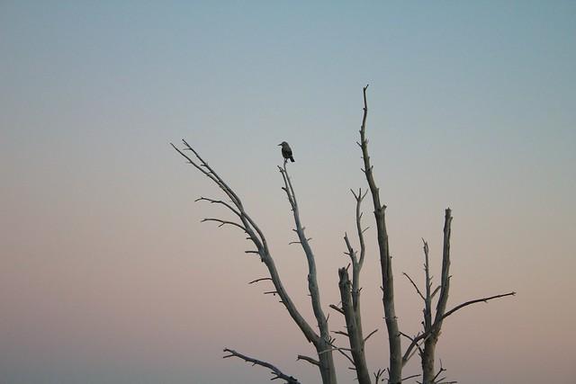 Bird on Old Tree