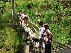 Trekking: crossing the bamboo bridge