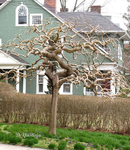 Peculiar Tree (4)