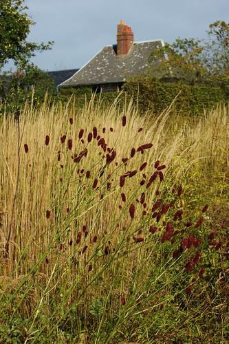 Late summer grasses (1) by KarlGercens.com