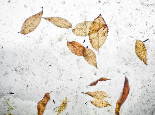 Leaves on Dirty Tapestry