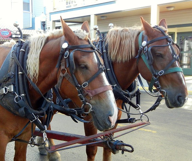 Luggage Horses
