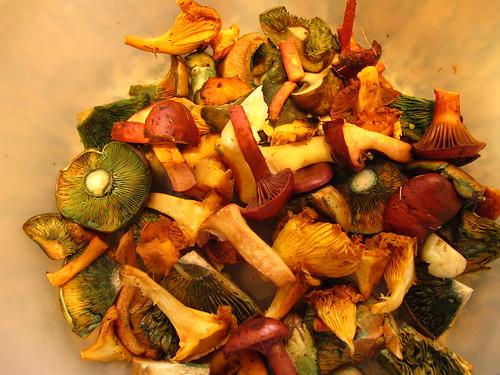 mushroom mix -  barrejat de bolets