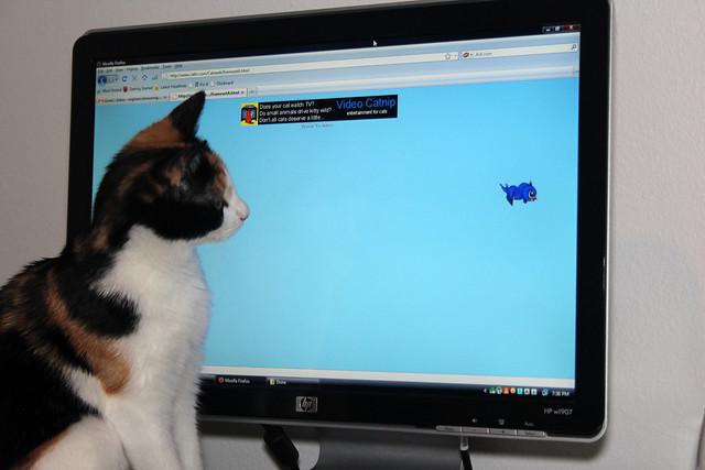 Maeby's new favorite website