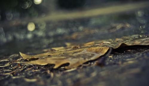 """019/365 """"Comienza el otoño"""" by Flickr Jiménez (Pedro Nog)"""