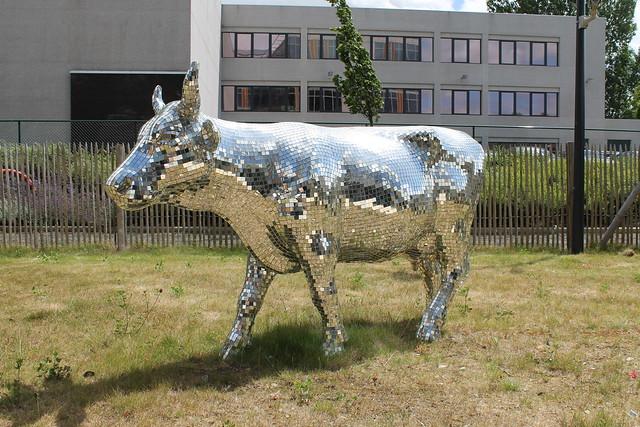 Dis-Cow