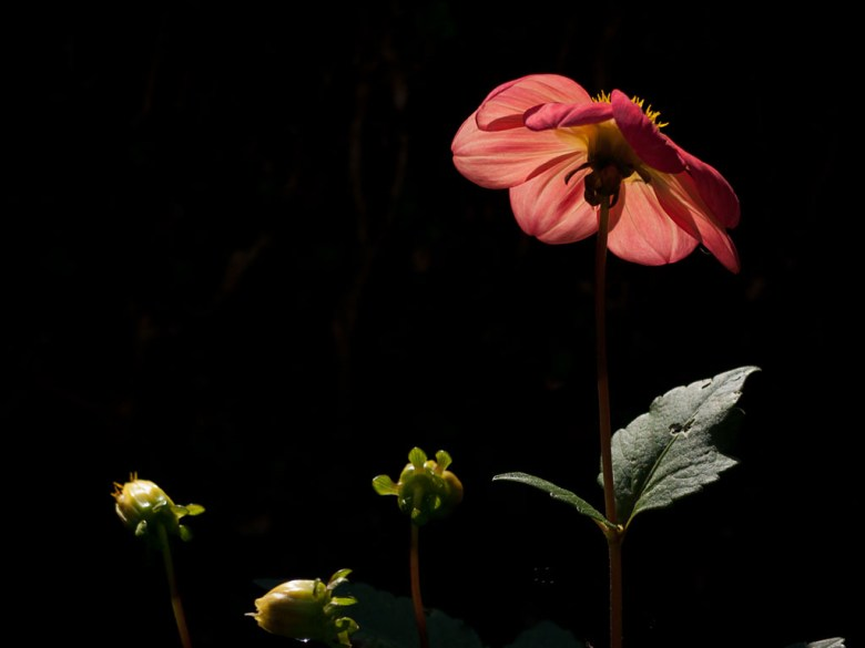 Chatsworth - Beyond Limits - Flower Against the Light