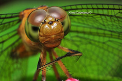 Dragonfly 03