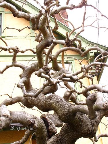 Peculiar Tree (2)