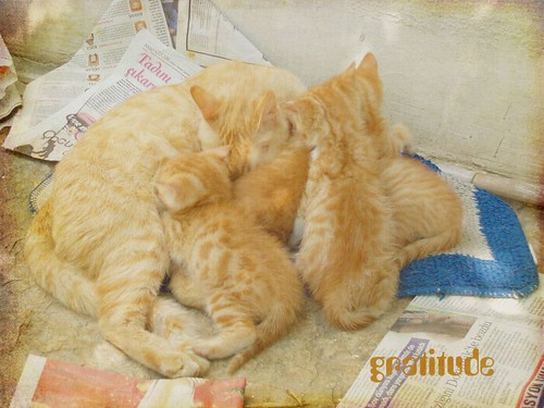 TextureTuesday-kittens-gratitude copy