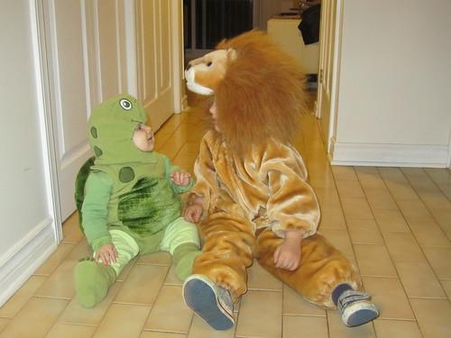 Lion vs Turtle