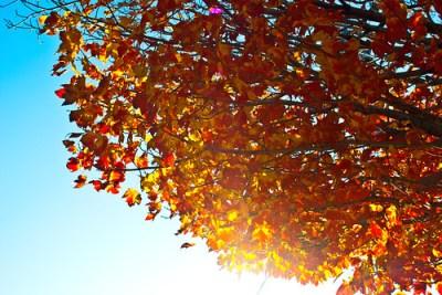 365-141 Autumn Sunrise