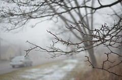 Foggy Tree Branch