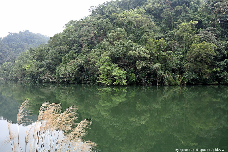 後慈湖 (36)