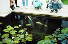 32-28-86 29 - Stapeley Fish (2)