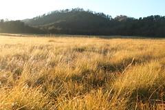 "Pendakian Sakuntala Gunung Argopuro Juni 2014 • <a style=""font-size:0.8em;"" href=""http://www.flickr.com/photos/24767572@N00/27161462695/"" target=""_blank"">View on Flickr</a>"