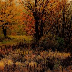 L'automne au Lac George...!!!
