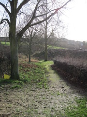 Footpath by the hedge IMG_1585
