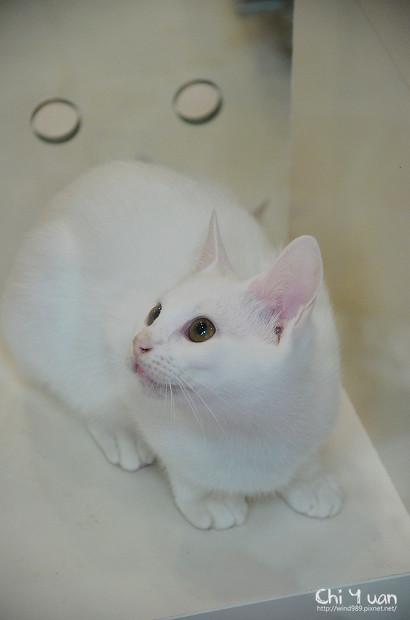小小白貓三胞胎09.jpg