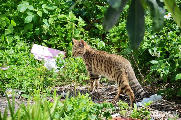 Cat漫步虎班02.jpg