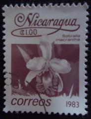 Resultado de imagem para Sobralia macrantha selos