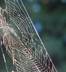 Cobweb at Mount Madonna Center