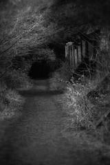 Another Dark Path