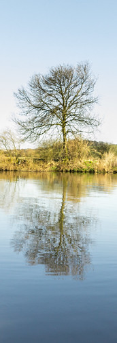 "Tree, Attenborough Nature Reserve - 19.jpg • <a style=""font-size:0.8em;"" href=""http://www.flickr.com/photos/69544236@N04/6996394177/"" target=""_blank"">View on Flickr</a>"