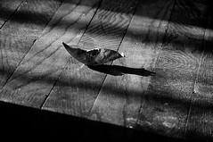 leaf on hardwood floor