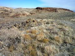 Owyhee Desert