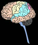 Goalfinder  brain-strucuture