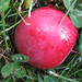 """Crab Apple"" - October 20, 2007"