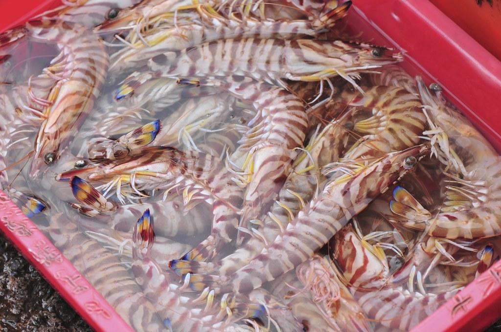 fishing port Daxi 26