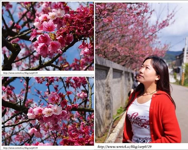 賞花.jpg
