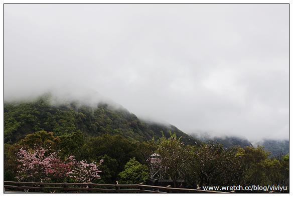 [旅遊.桃園]拉拉山.恩愛農場~粉櫻吹雪.賞雲海 @VIVIYU小世界