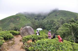 cameron highlands- malaisie 14