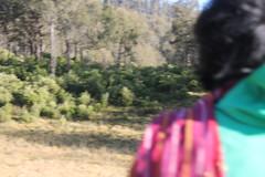 "Pendakian Sakuntala Gunung Argopuro Juni 2014 • <a style=""font-size:0.8em;"" href=""http://www.flickr.com/photos/24767572@N00/26555329514/"" target=""_blank"">View on Flickr</a>"